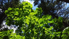 Deciduous in the forest