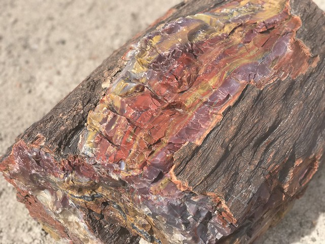 Crystal coloring of petrified wood
