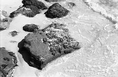 Alle spiagge bianche di Rosignano 1