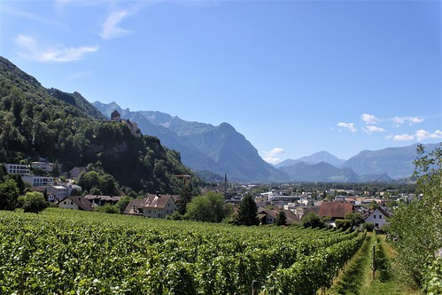 vineyard and mountains in Vaduz