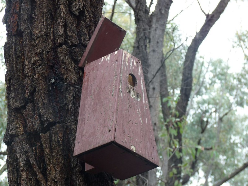1989 nest box version
