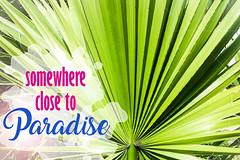 Palms: Somewhere close to Paradise