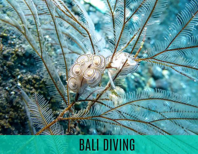 BALI TRAVEL - DIVING