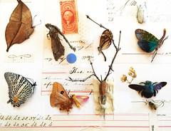 impermanence 1 (entomology)