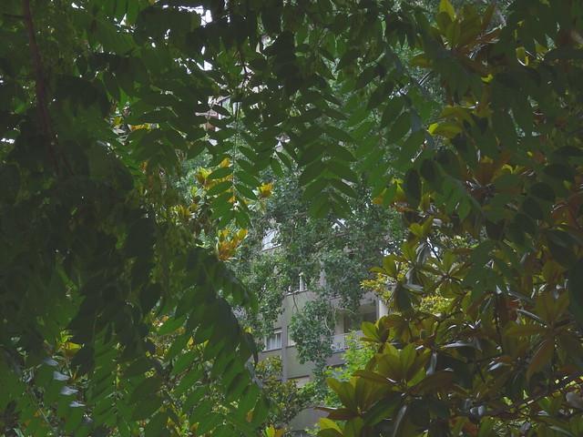 Selva del barrio