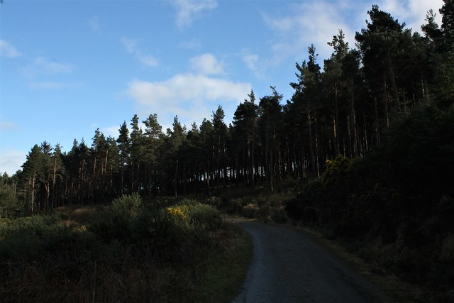 Crone Woods
