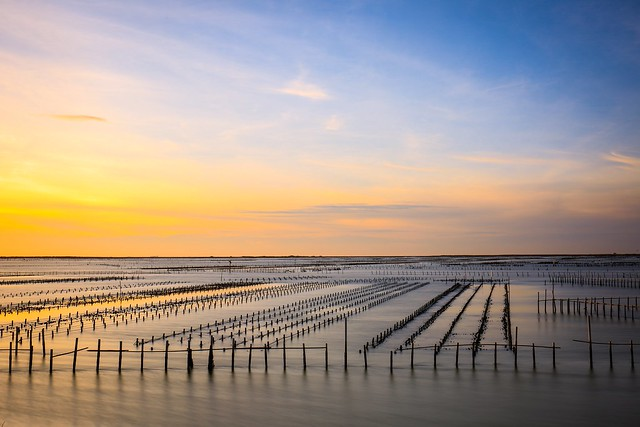 潟湖的夕色(Oyster fields sunset)。