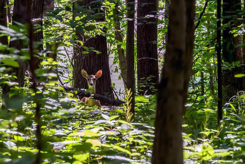 Marion's Woods Nature Preserve - June 21, 2017