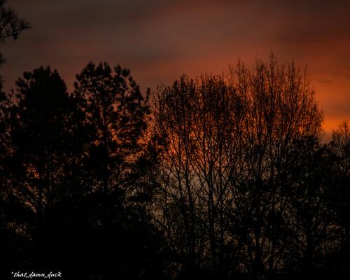 nature sunset redsky trees