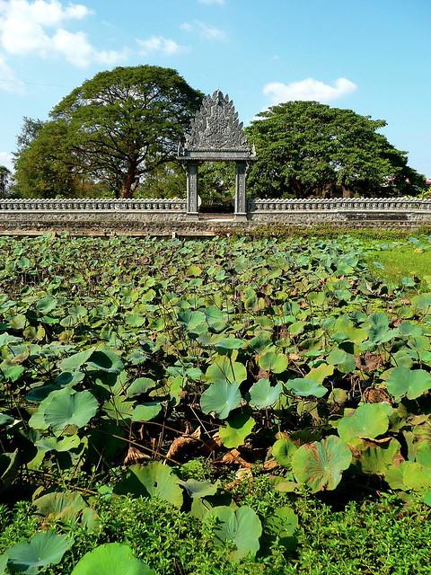Water Lilies Pool