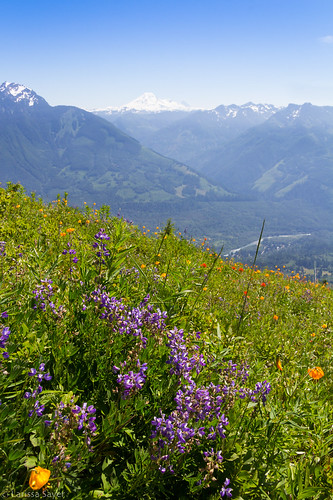 2017 britishcolumbia canada chilliwack elkmountain hiking summer flowers wildflowers lupine lupinusarcticus arcticlupine view mountains bordermountains