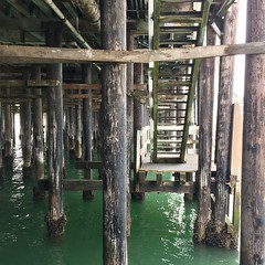 under the wharf