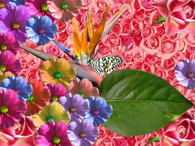 Beautiful wallpapers - Free stock photos live wallpaper 4k