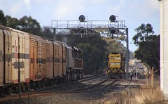 SCT010 SCT011 and BK002 race past NR119 at the down end of Diapur loop