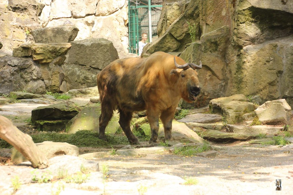 Zoo Besuch 11.07.20173
