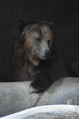 san diego zoo group 6 DSC_0376