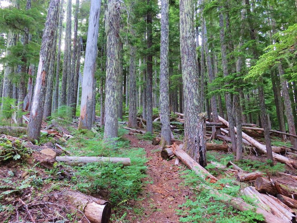 Scar Mountain Trail