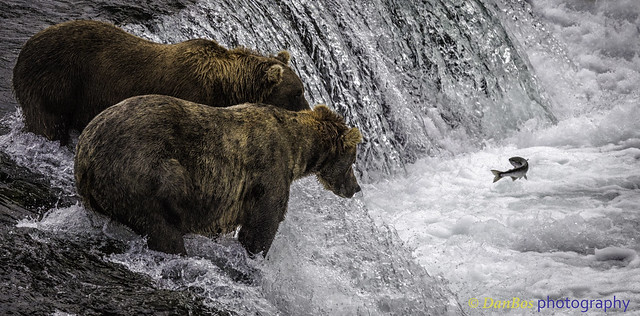 "Bears: ""Please come up!, we are waiting for you!!!"""