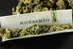 Monsanto and Bayer are Maneuvering to Take Over the Cannabis Industry ? Waking Times