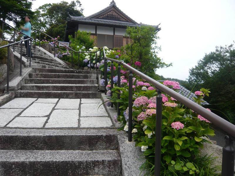 柳谷観音の坂の紫陽花