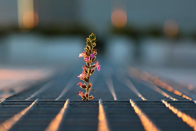 Life could flourish everywhere...