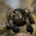 Windmill in the spiders eyes 👀  RICH0068.jpg