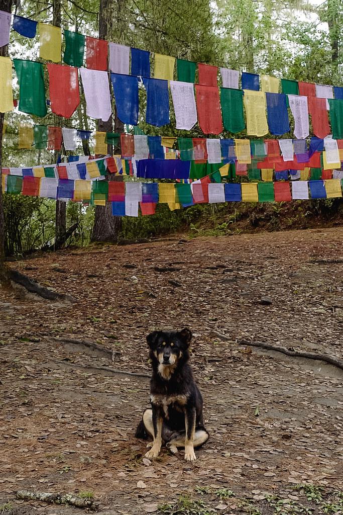 Sketch-Bhutan-Drukasia-Travel-148
