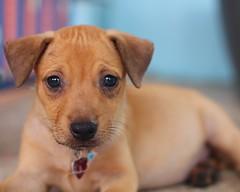 Aruba Animal Shelter Dog