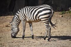 zebra wide profile left