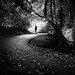 St. Anne's park - Dublin, Ireland - Black and white street photography by Giuseppe Milo (www.pixael.com)