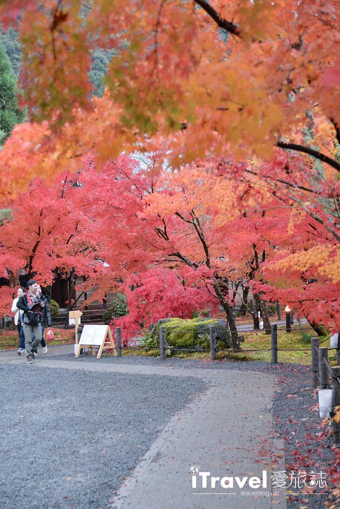 京都赏枫景点 永观堂 (63)