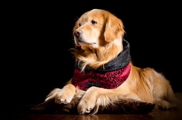 The Elegant Dog