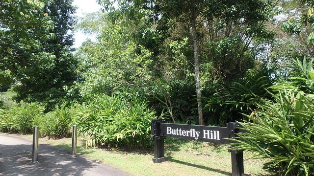 Butterfly Hill, Pulau Ubin