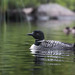 Portrait Of A Loon by overthemoon3