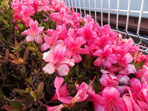 加平パーキングの花壇