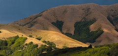 Late-Afternoon-West-Marin
