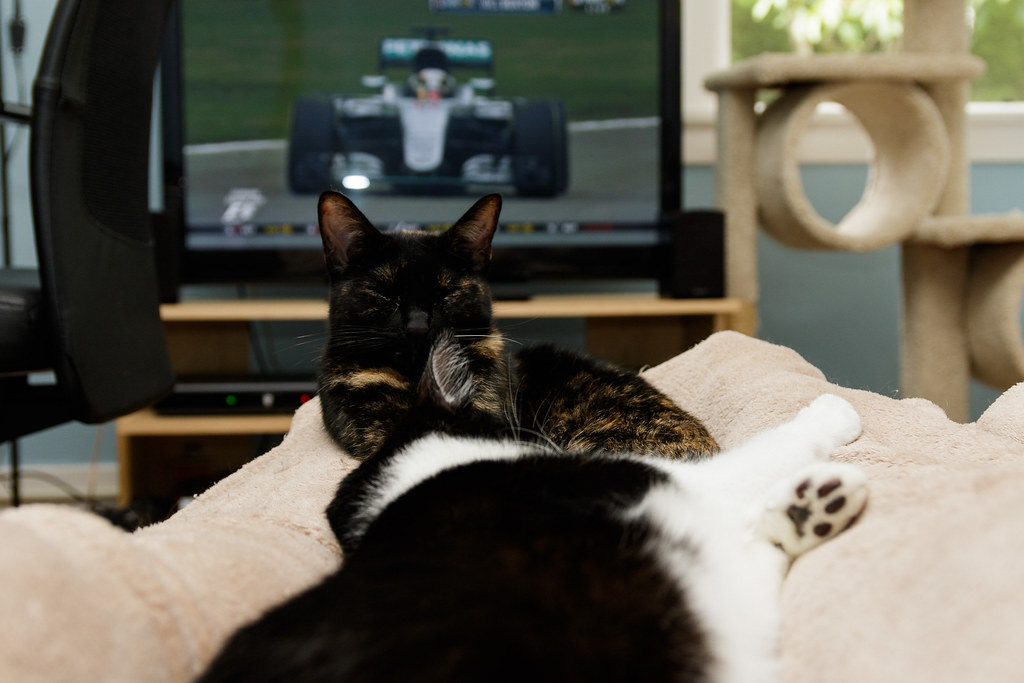 Our cats Trixie and Boo sleep in my lap while a Formula 1 race is on TV in the background