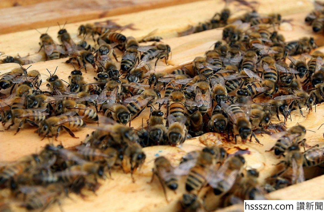 bees.jpg.size.custom.crop.1086x710_1086_710