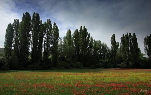 La primavera en los campos de Castilla....