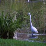egret-lake-1-2007