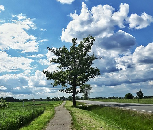 magnificent photography goodvibes photo summer vibes happy nature tree glorious fields sunny lonely grass road view