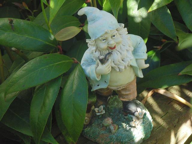 Grandpa Gnome - I, Sony DSC-H200