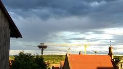 Kurz aus dem Schlafzimmerfenster schauen, ob die Einheimischen noch da sind. Yep. #VisitAlsace - Photo of Obermodern-Zutzendorf