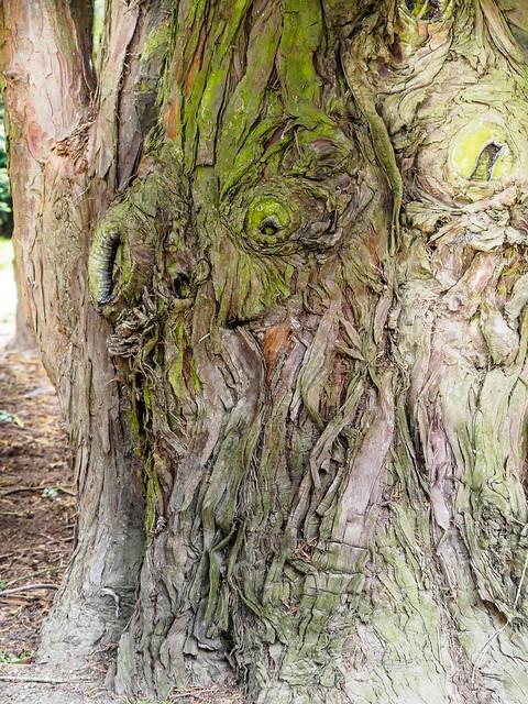 again a tree troll, Olympus PEN-F, LUMIX G VARIO 45-150/F4.0-5.6