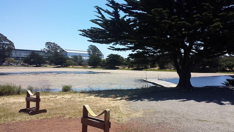 Algae at Berkeley Aquatic Park