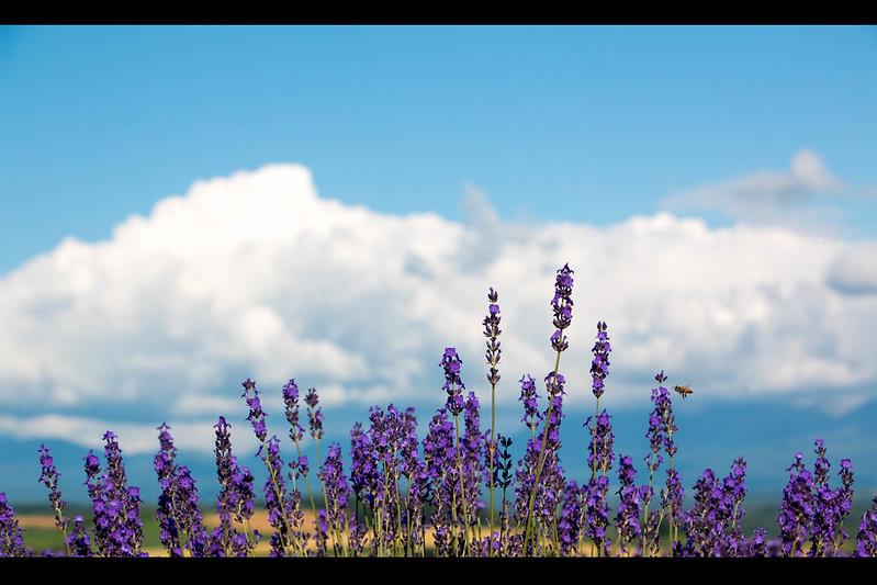 北海道の夏の風景