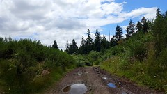Dirt road in Port Orchard