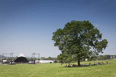 Pyramid Field Tree