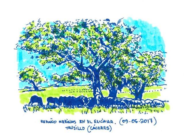 Rebaño de Merinas en Extremadura