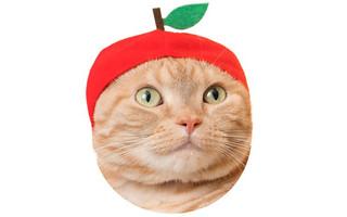 【官圖公開!】奇譚俱樂部【可愛貓咪頭套】第八彈!五顏六色的水果口味登場~ かわいい かわいい ねこフルーツちゃん